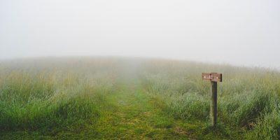 grass-1209945_1920